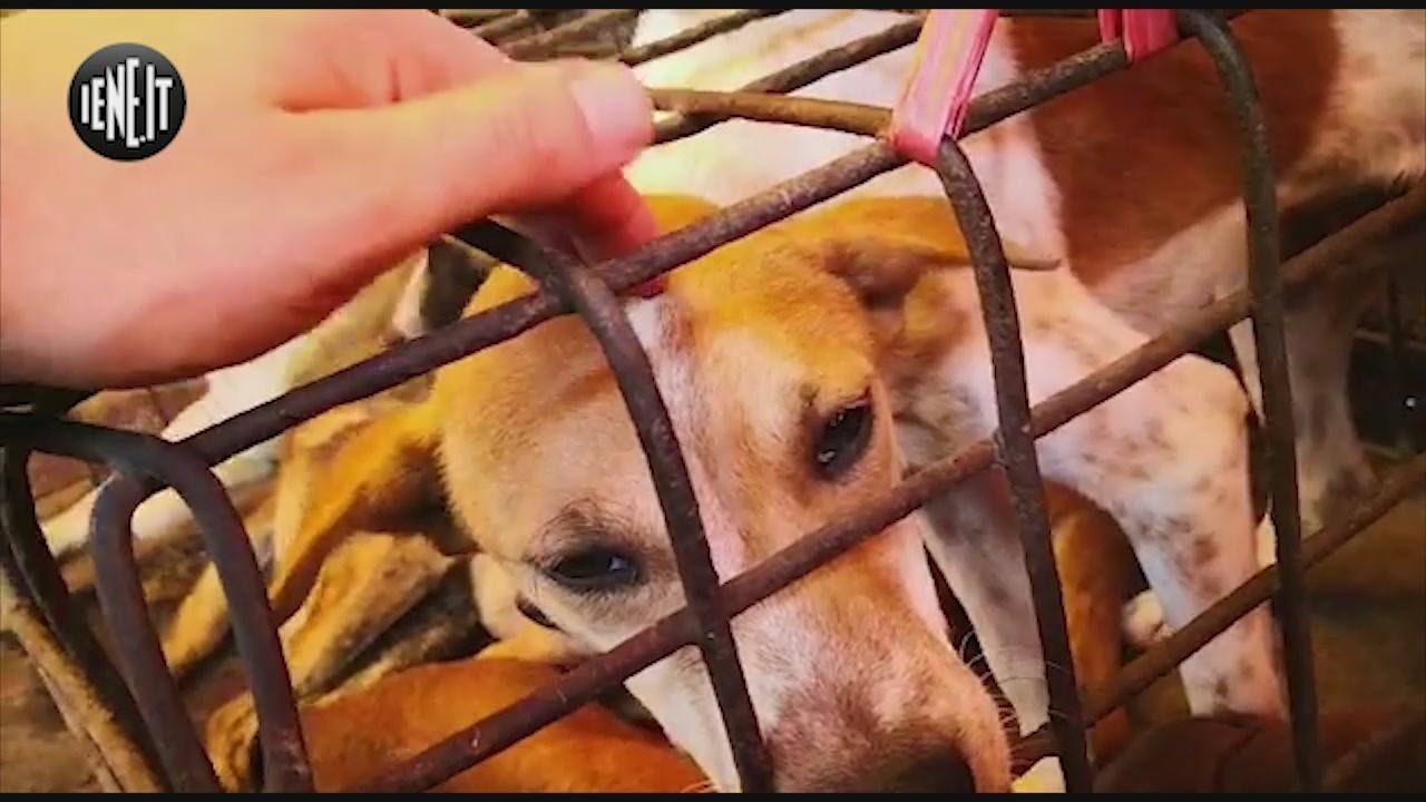 cani gatti macello mercato indonesia tomhon davide acito salvataggio