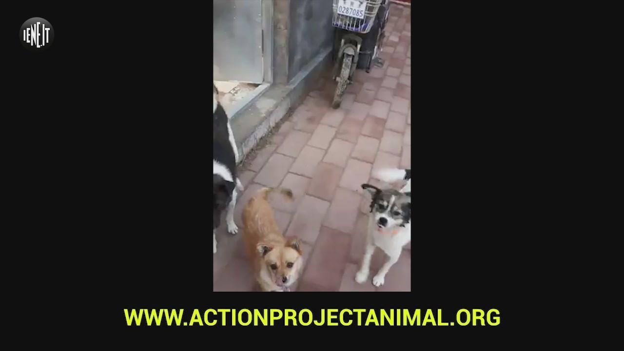yulin cani adozioni