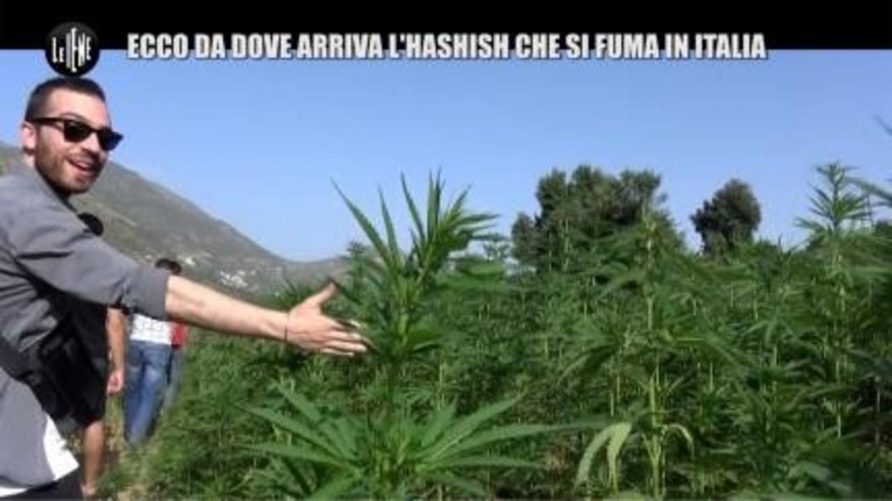 MAISANO: Ecco da dove arriva l'hashish che si fuma in Italia