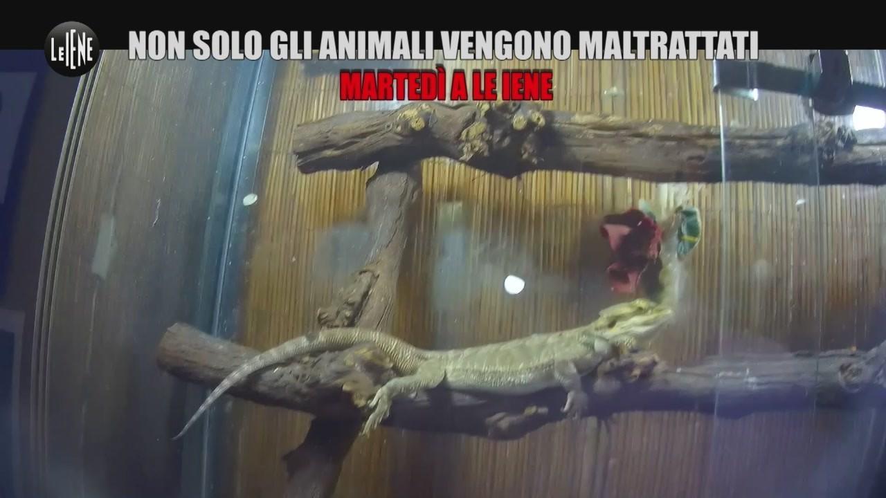 vendita animali negozio