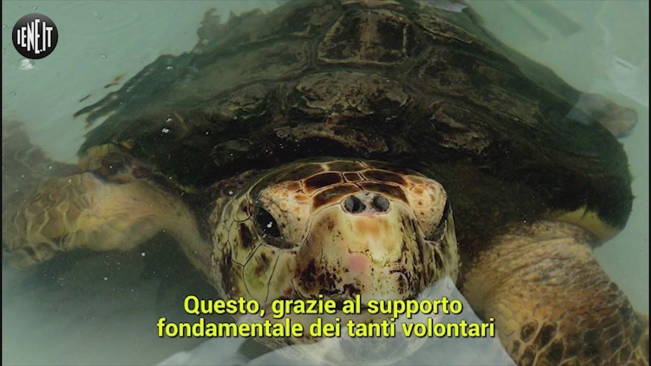 chiude ospedale tartarughe lampedusa
