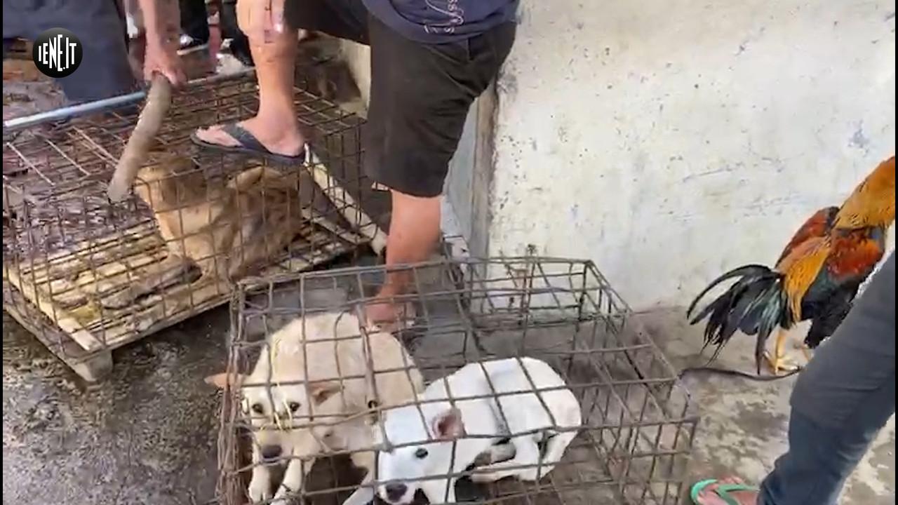 Massacro dei cani: Davide Acito scampato dal macellatore