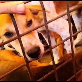 lotta carne cane parlamento
