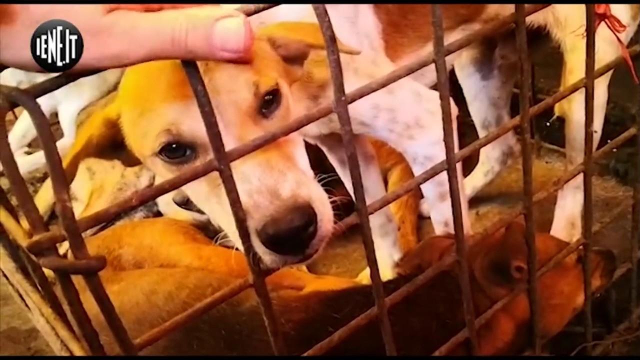La lotta al mercato della carne di cane al Parlamento europeo