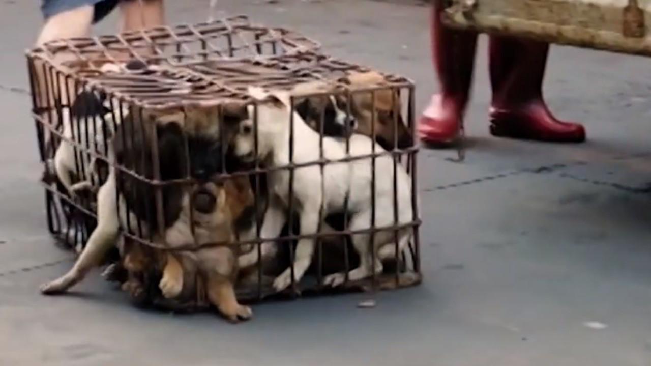Shenzhen potrebbe essere la prima città in Cina a vietare di mangiare carne di cane