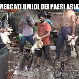 shenzhen vietata carne cane gatto