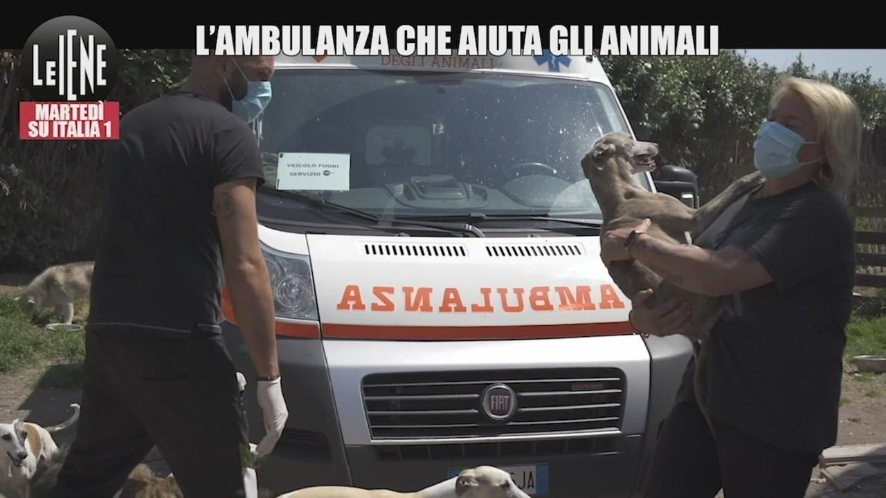 ambulanza animali rifugio hope agrigento