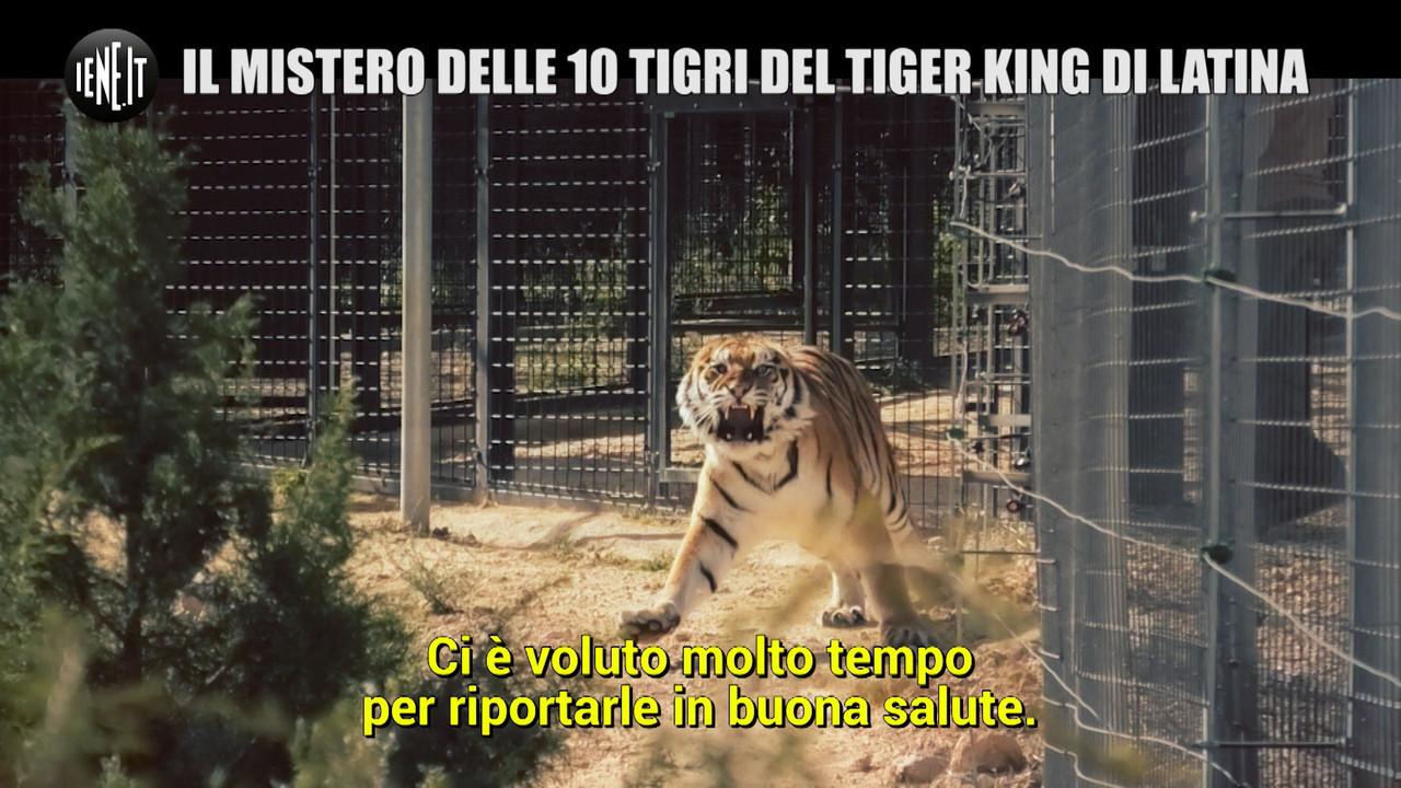 Tiger King italiano tigri odissea