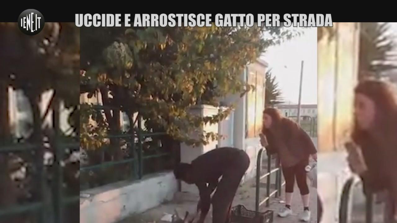 livorno uccide arrostisce gatto per strada
