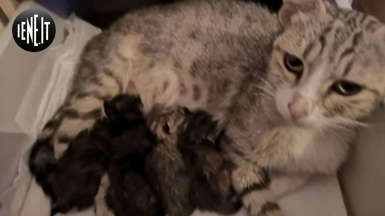 """Gattini abbandonati chiusi in un sacchetto. """"Ora stanno bene!"""""""