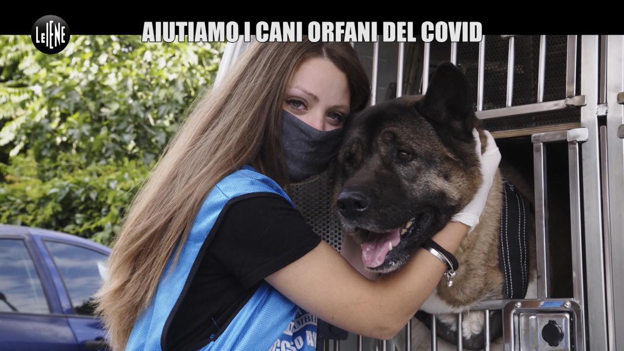 Coronavirus cani orfani