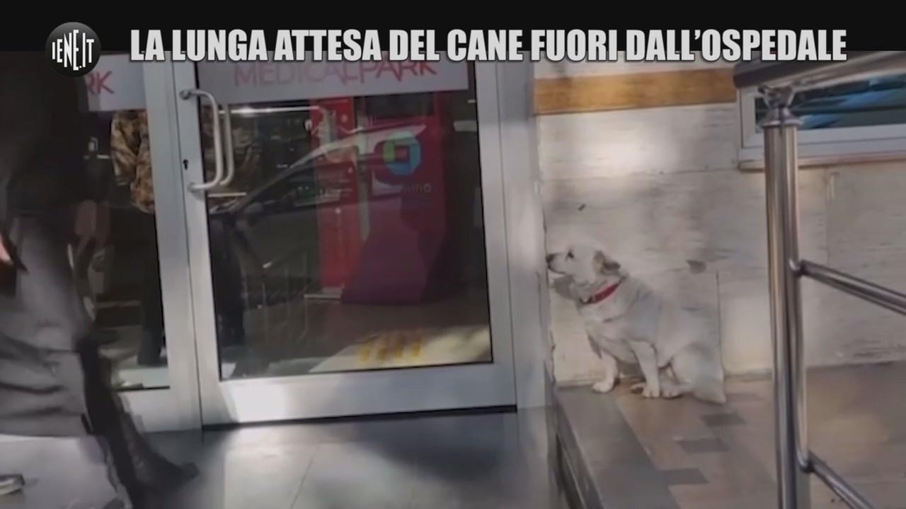 padrone malato cane ospedale