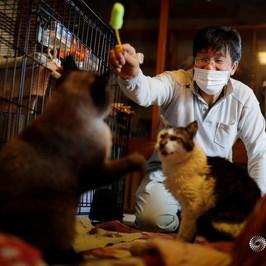 Fukushima 10 anni gatti