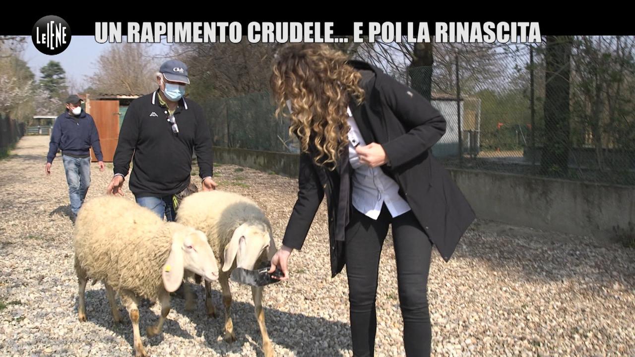 Ladri di pecore