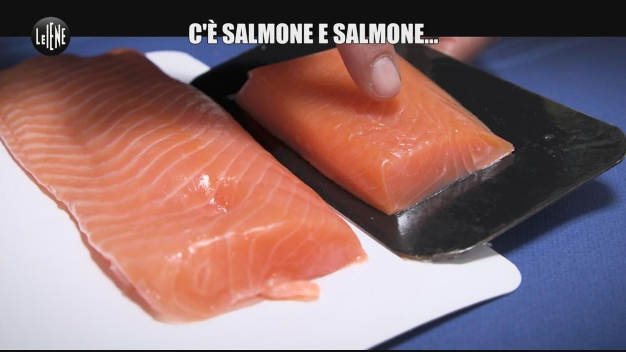 salmone e salmone ecco come distinguerli