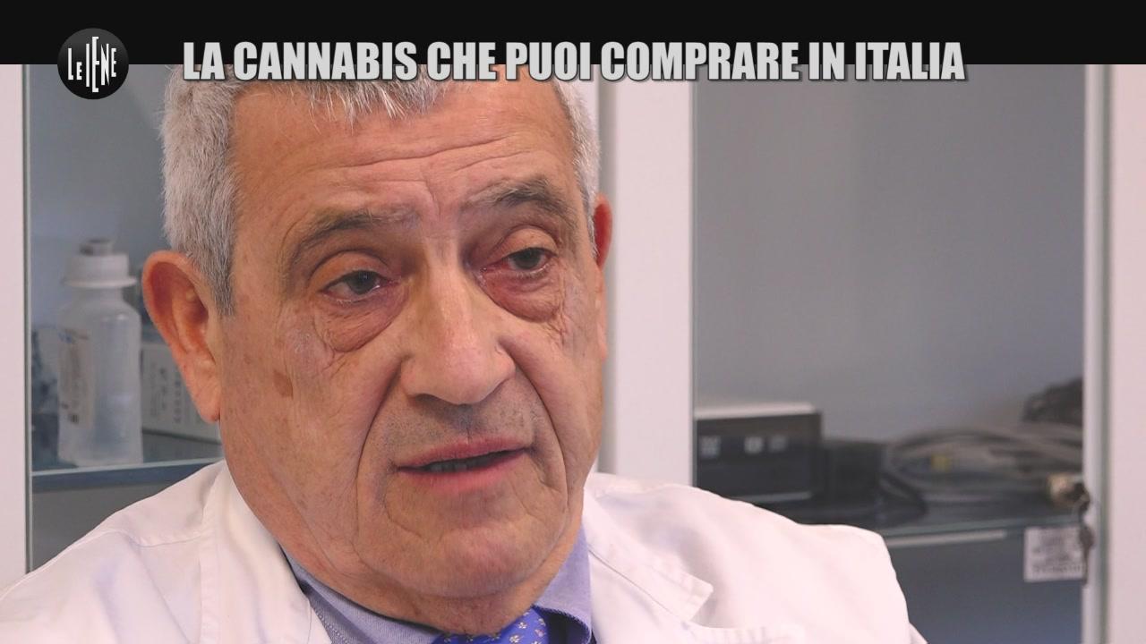 cannabis legalizzazione light terapeutica marijuana thc cbd