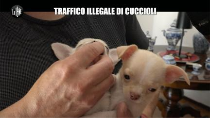 RUGGERI: Traffico illegale di cuccioli