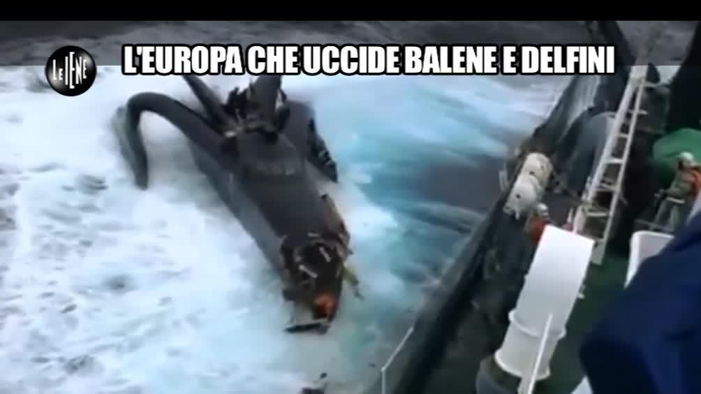 CASCIARI: L'Europa che uccide delfini e balene